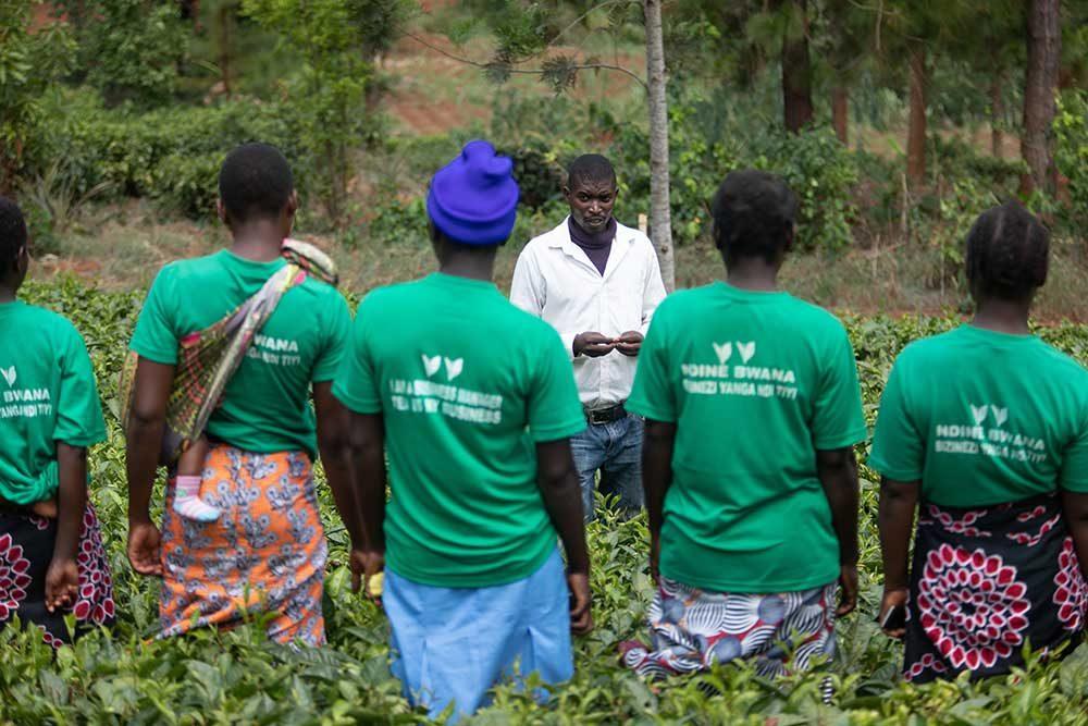 Malawi Tea 2020 : Ethical Tea Partnership