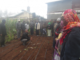 Demonstration on how to install drip irrigation