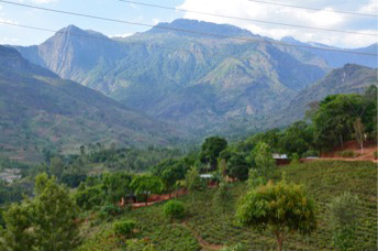 Smallholder tea below Mount Mulanje, deforestation of the lower slopes is clearly visible