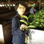 Nelia Latief, ETP Regional Manager for Indonesia, looking at leaf quality