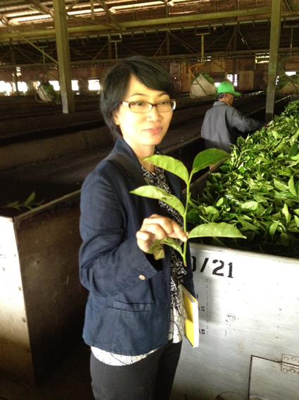 Nelia Latief, ETP Regional Manager for Indonesia looking at leaf quality