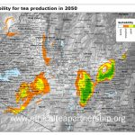 Suitability of tea production by 2050, Kenya