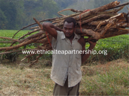 The roll out of energy saving stoves will lead to less wood being harvested from forests